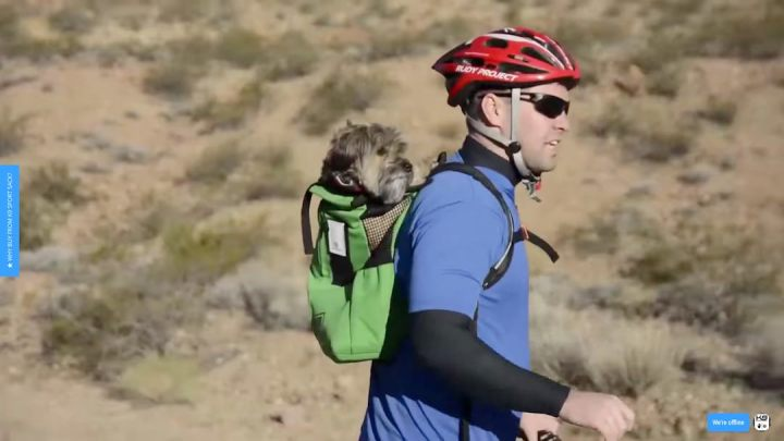 Even on your bike, your Schnauzer can come with you too with the K9 Sports backpack