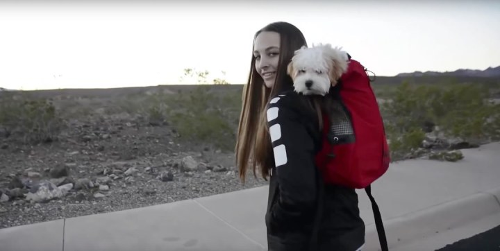 Forward facing backpack so your dog sees what you see with the K9 Sports backpack