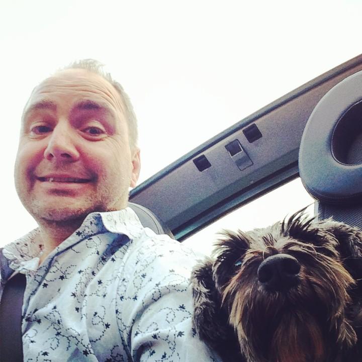 Frankie the Schnauzer in the car